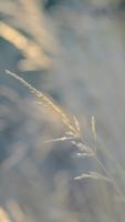 Природа, фотография, Атанас Камешев - преподавател по Стенопис и Рисуване